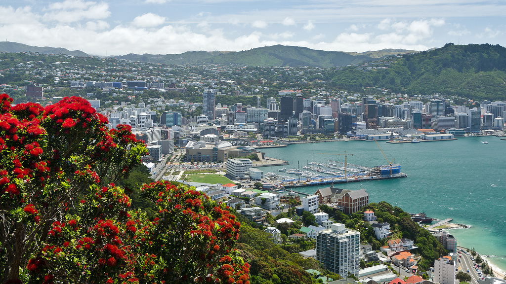 Wellington city with pohutakawa